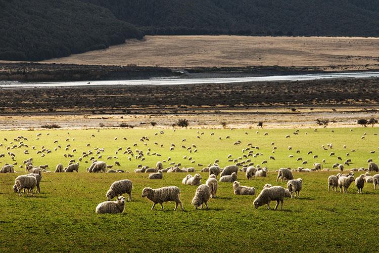 ニュージーランドの画像